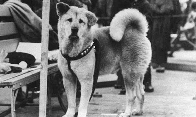Hachiko, la historia del perro más fiel de todos los tiempos
